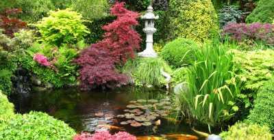 Ortensie per giardini estivi eleganti e colorati for Anemone giapponese