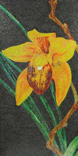 Orchidea_1.jpg