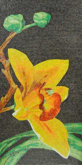 Orchidea_2.jpg